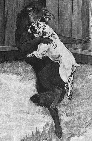 Jack London Beyaz Diş özeti Hikayeler Kitap özetleri Ve Yorumlar